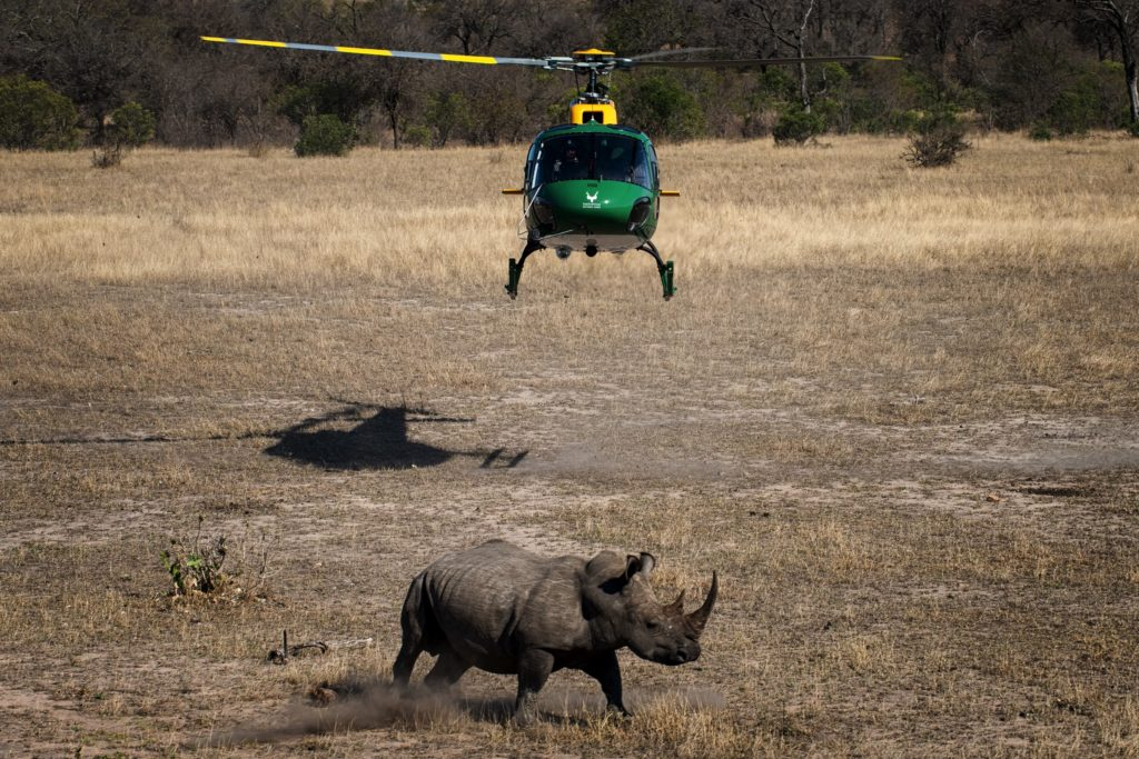 A SANParks helicopter with rhino