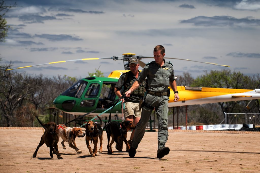 A SANParks helicopter pilot with K-9 assets