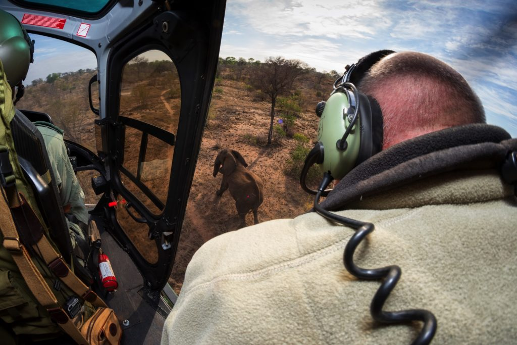 Veterinarian Peter Buss darts an elephant from a SANParks helicopter