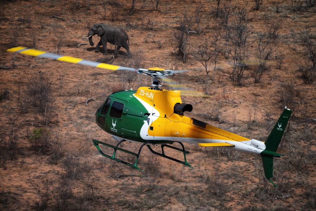 SANParks helicopter with elephant in Kruger National Park