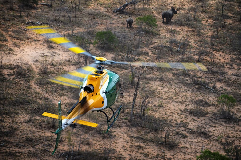 A SANParks H125 helicopter watches two rhinos in Kruger National Park